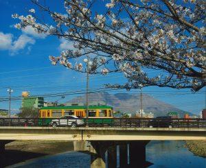 市電と桜と桜島